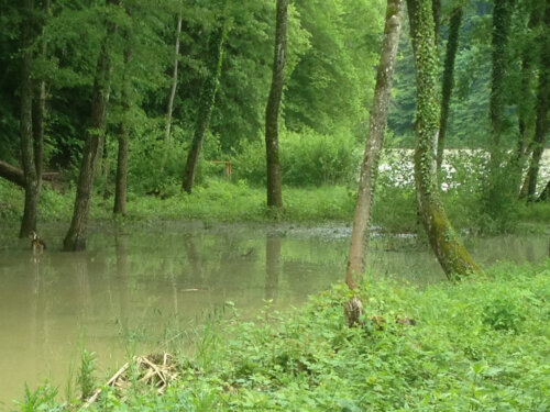 Amphibienlaichgebiete